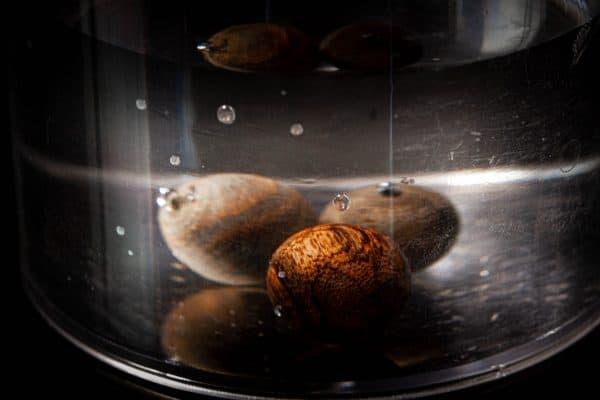 Trầm hương với lượng tinh dầu mạnh thường chìm trong nước