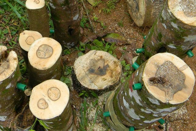Bỏ túi 4 cách nhận biết gỗ Trầm Hương thật - giả