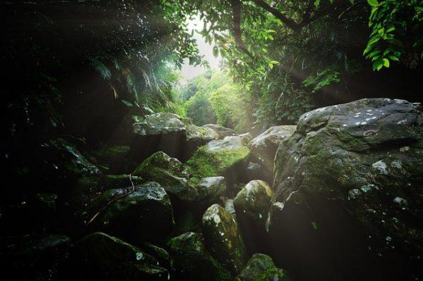 Rừng Trầm Hương